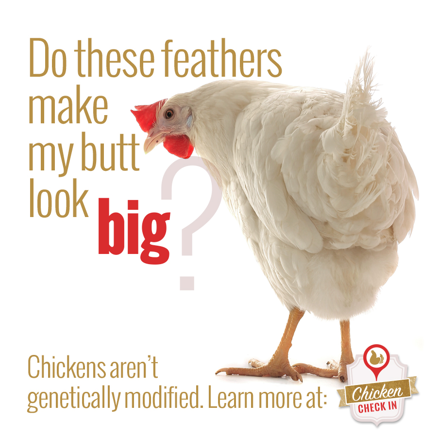 Are chickens genetically modified?